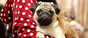 Welcome to PugBase