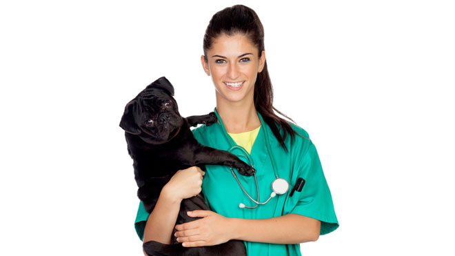 Finding a VET for your Pug